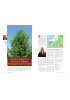 Did Norway Spruce Survive in Refuges During the Last Ice Age?