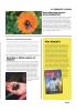 Forsker på pollinatorstriper