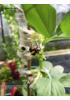 Insektmidlenes historie