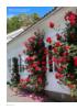 Kle veggene med klatreplanter
