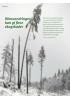 Klimaendringer kan gi flere skogskader