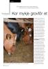 Kor mykje grovfôr et norske mjølkekyr?