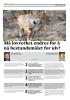 Må lovverket endres for å nå bestandsmålet for ulv?