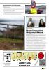 Svevestøv forkorter livet til Oslo-borgere