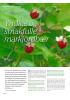 Yndige og smakfulle markjordbær
