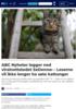 ABC Nyheter legger ned viralnettstedet SeDenne: - Leserne vil ikke lenger ha søte kattunger