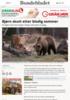 Bjørn skutt etter blodig sommer