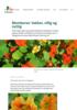 Blomkarse: Vakker, villig og nyttig