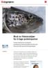 Bruk av fiskeavskjær for å lage proteinpulver