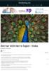 Det har blitt færre fugler i India