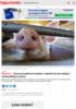 Dyrevernsaktivist handlet i nødrett da hun deltok i mishandling av griser