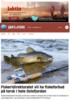 Fiskeridirektoratet vil ha fiskeforbud på torsk i hele Oslofjorden