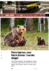 Flere bjørner, men færre binner i norske skoger