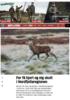 For få hjort og elg skutt i Nordfjellaregionen