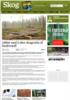 Jobber med å sikre skogsvirke til biodrivstoff