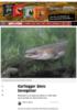 Kartlegger ålens bevegelser