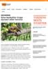 Kina beskyttar truga dyreart etter korona