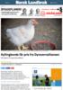 Kyllingbonde får pris fra Dyrevernalliansen