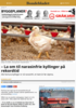 - La om til narasinfrie kyllinger på rekordtid