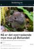 Nå er det overraskende mye mus på Østlandet