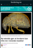 Ny teknikk gjør at forskere kan titte inn i levende insekter