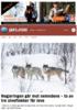 Regjeringen går mot nemndene - to av tre ulveflokker får leve