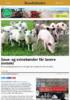 Saue- og svinebønder får lavere inntekt
