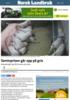 Seminprisen går opp på gris