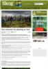 Stor interesse for planting av furu