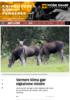 Varmere klima gjør elgkalvene mindre