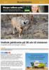 Vedtok jaktkvote på 36 ulv til vinteren